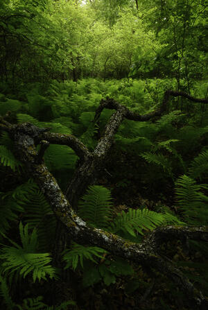 Daniel Sullivan - Forest Green