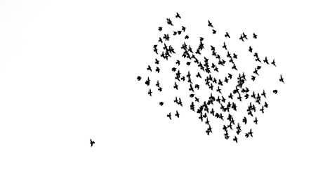 Birds flying one solo