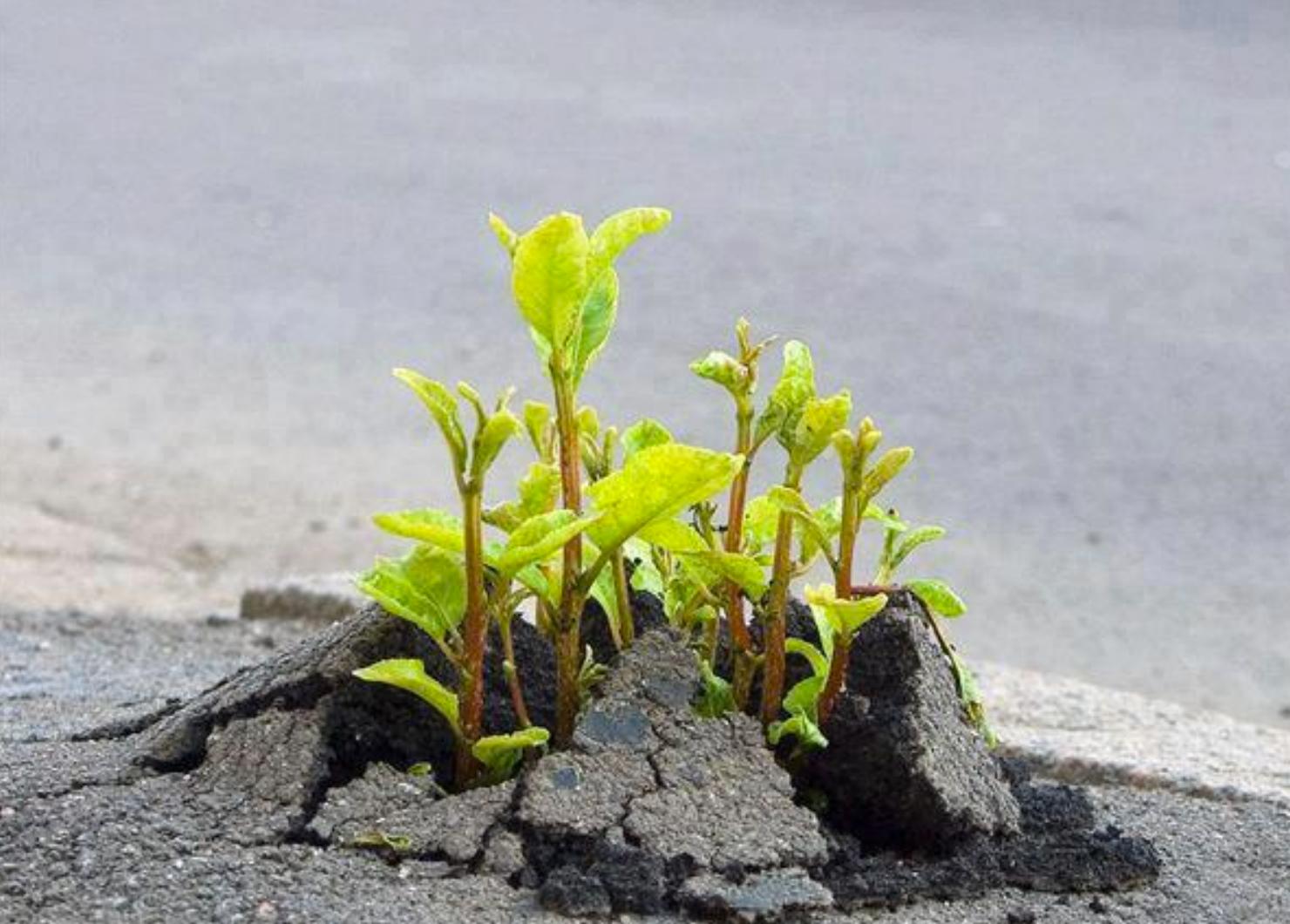 Plant Breaking Through Soil