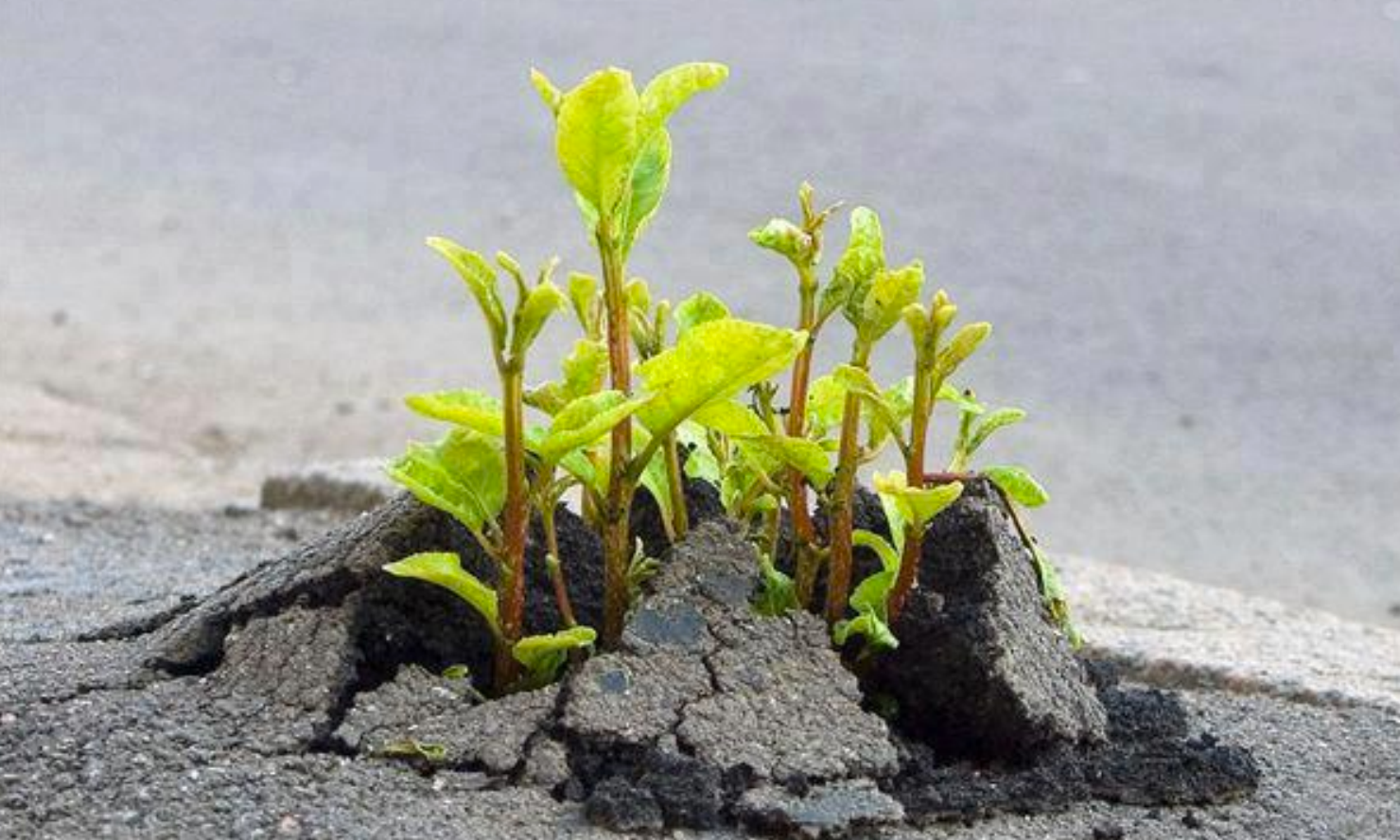 Plant breaking through pavement.jpeg