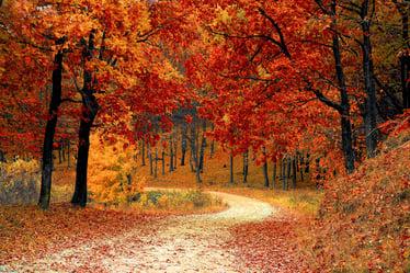 fall-1072821_1920