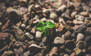 plant through rocks