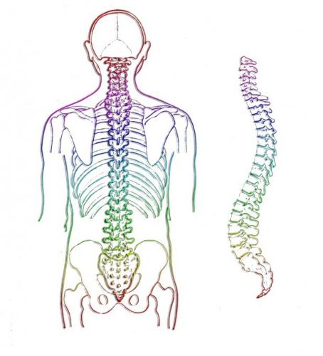 spine_2.jpg